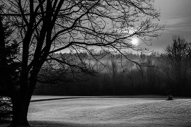 Ash in Frost