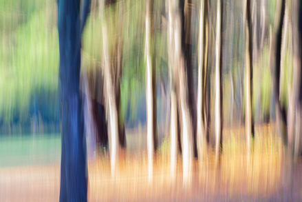 Fall Forest 3