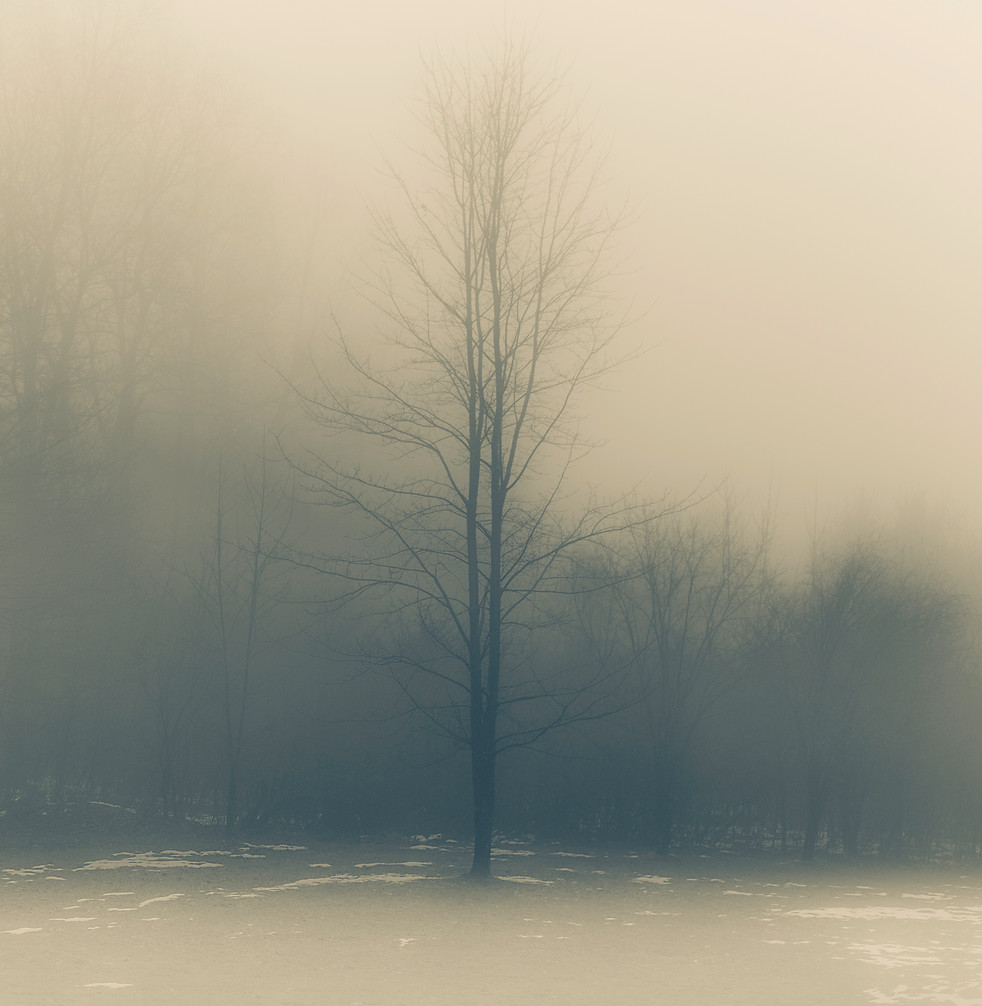 Misty Winter