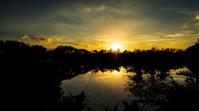 Sunset 3 at wakodahatchee