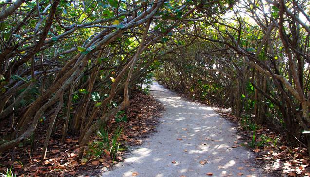 Seagrape Arch