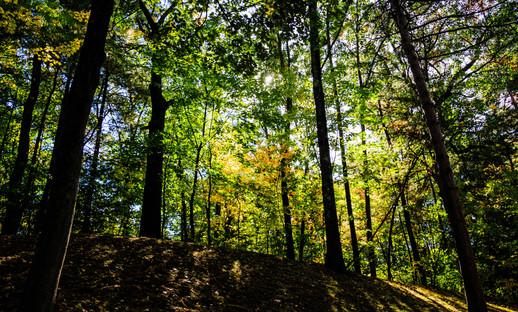Autumn in Thatcher Park