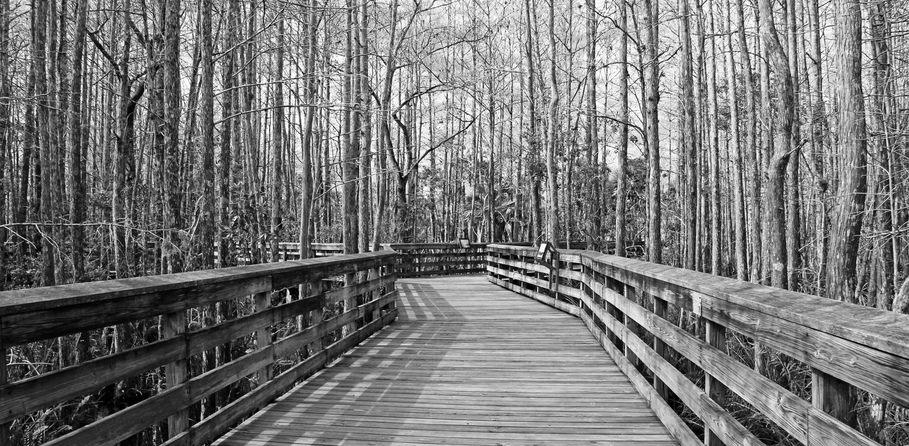 Grassy Waters Boardwalk