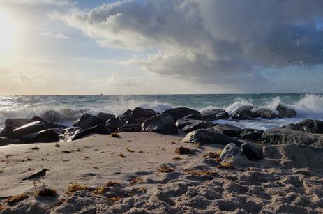 Sandpiper and Rocks
