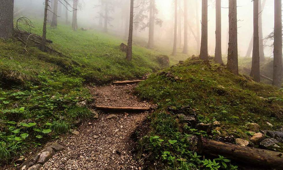 Wald im Rofangebirge