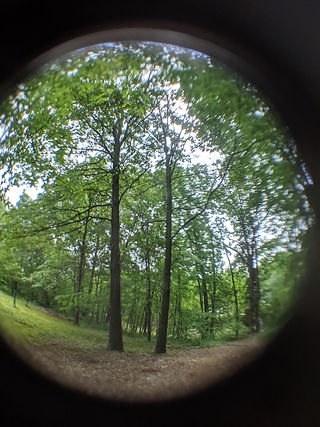 Curved lens tree photo.jpg