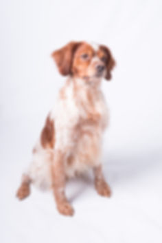 dog-photography-Hereford_4