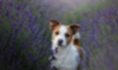 Dog15.jpg