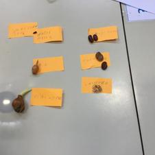 Exploring seeds and bulbs