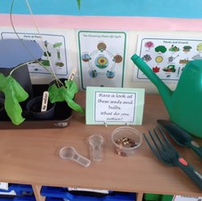 Observing seeds and bulbs