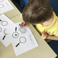 Observing seeds and bulbs closely