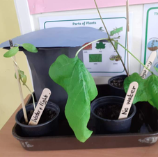 WS: Conditions for plant growth