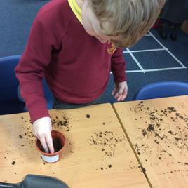 Planting flower seeds