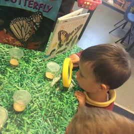 Observing caterpillars