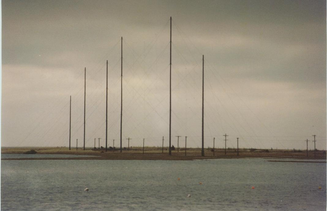 Antennas in marsh