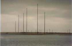 Antennas in marsh