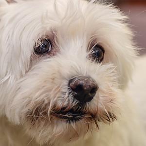 Hondenkapsalon Anubis