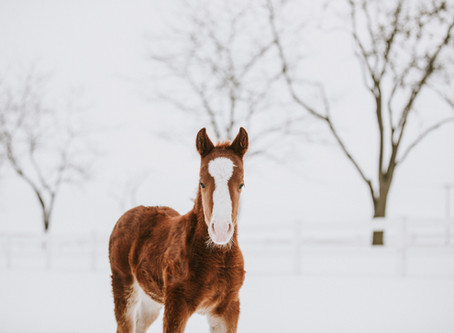 Are you really considering everything when choosing a Stallion to breed to this year?