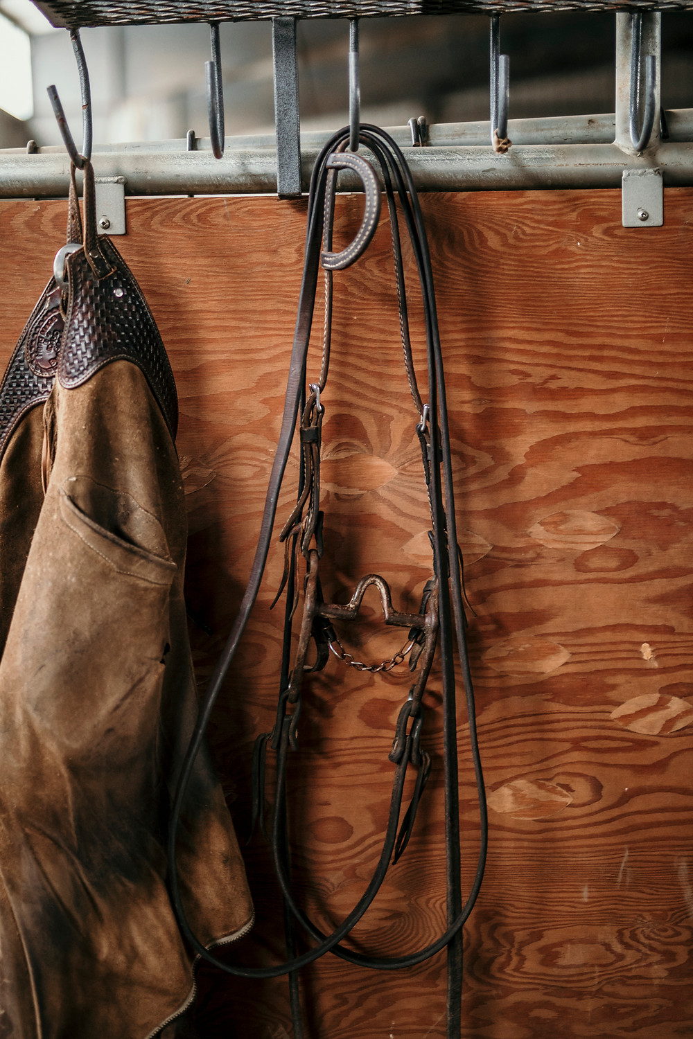 cutting horse bridle