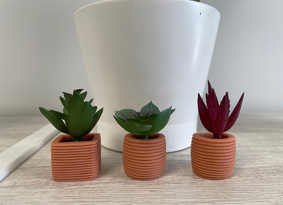 Succulent Magnets
