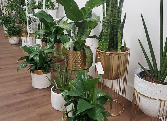The Plant Designs Studio Floor Plants