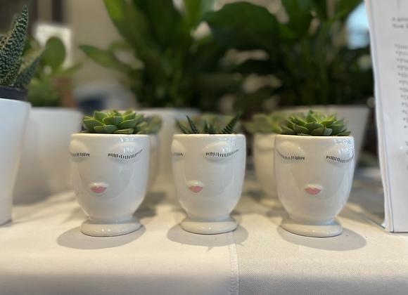 Succulent Ladies