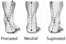 Types of foot by functionality