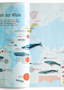 Die Welt der Wale. Magazin Natur (Natur und Kosmos)