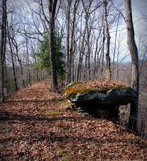 Morris Creek Wild Life Management Area