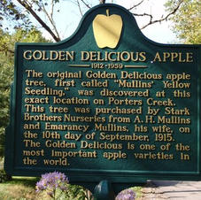 Golden Delicious Apple Festival