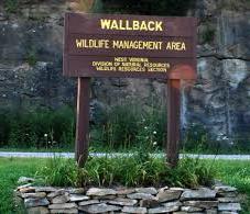 Wallback Wildlife Management Area