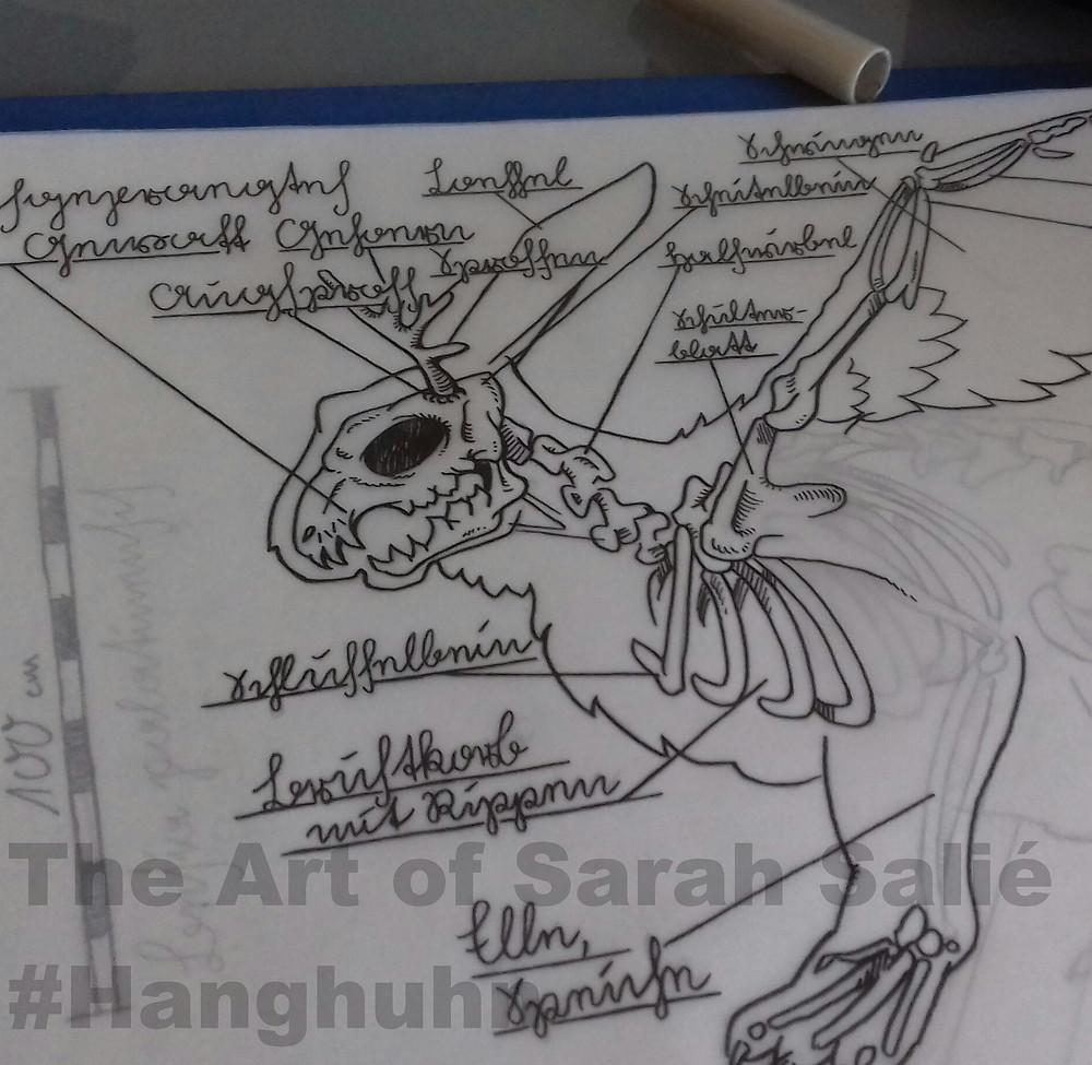Jackalope anatomy