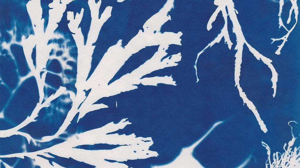 From the Brighton Seaweed Series