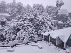 Garden Snowfall View