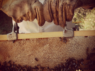 What Honey Bees Have Taught Me About Xenophobia