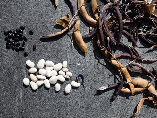 Fall Seed Saving Tips