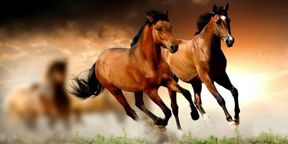 להעיר את סוסי הפרא