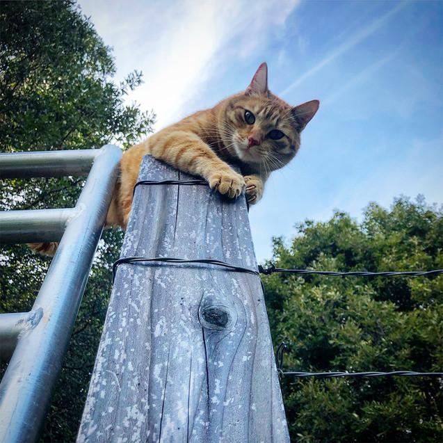 Ranger on fence