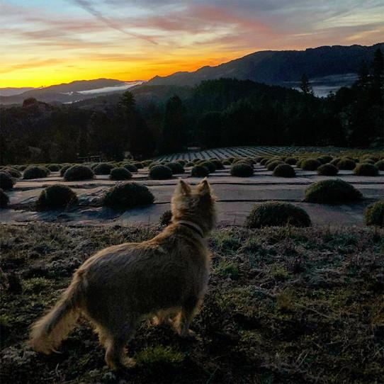 Brodie sunset