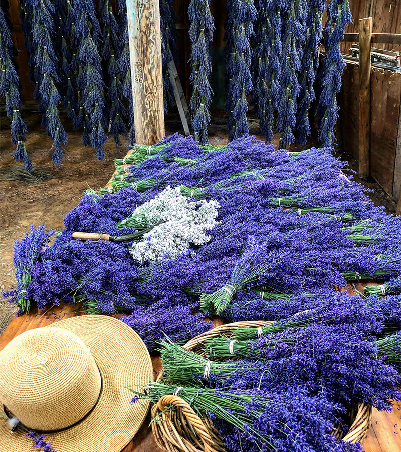 lavender drying barn