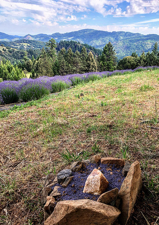 cairn in the lavender fields