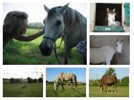 chevaux 2.jpg