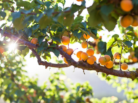 Our New World: the Fruit of Patience
