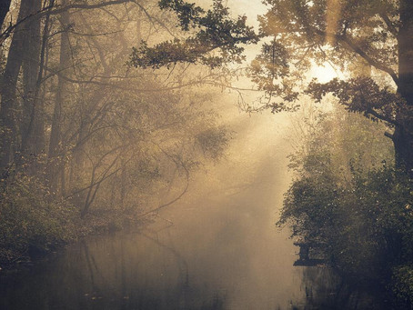 Crisis into Creativity: through the dark wood