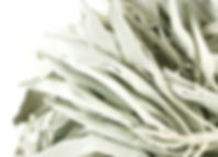 white sage leaves_edited.jpg
