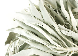 white sage leaves_edited.jpg