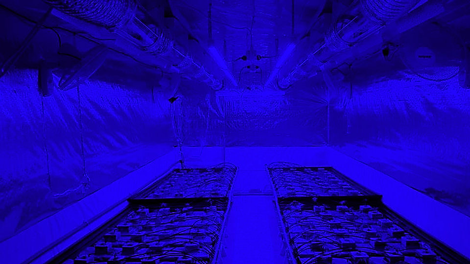 home grow room blue tint.jpg