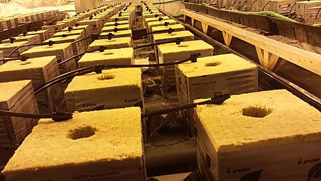 rock wool hydroponic growing system