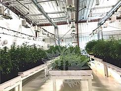 grow room building.jpg