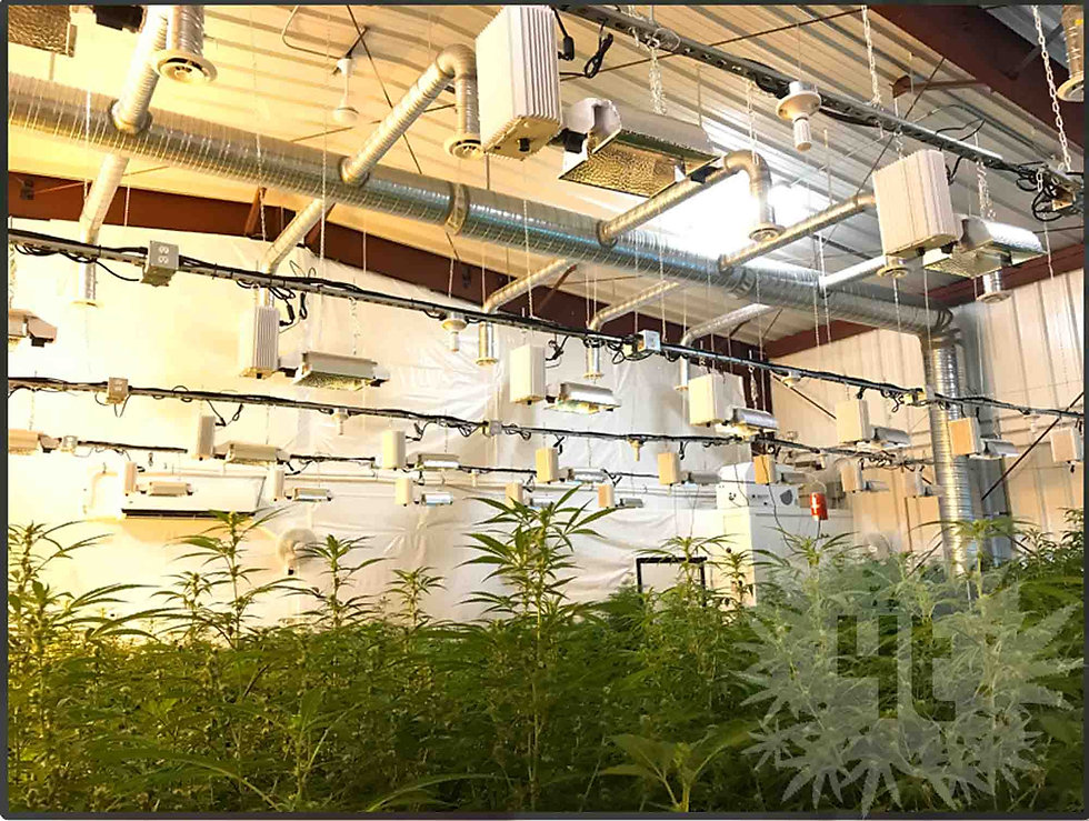 large micro-cultivation cannabis facility